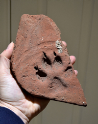 A rare, huge and heavy Roman brick tile featuring a superbly detailed and very large paw imprint from a large dog or Wolf, Germany. SOLD